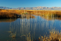 Bear River Refuge